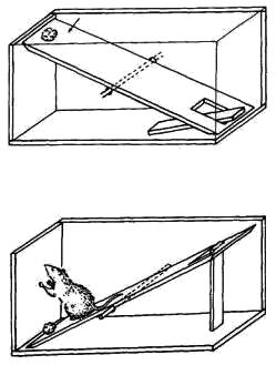 Ловушка для кота своими руками чертежи 18